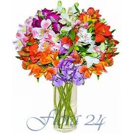 Купить садовые цветы в могилеве